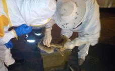 Retiran una colmena de abejas de un árbol a pie de carretera en Málaga capital