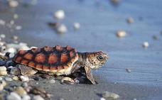 Una mujer acude a urgencias con una tortuga muerta en su vagina