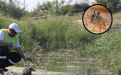 Los mosquitos vuelven a la desembocadura del Guadalhorce