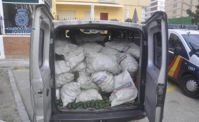 Detenido tras huir en coche durante 20 kilómetros al ser sorprendido robando aguacates en una finca de Vélez-Málaga