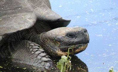 Investigan el robo de 123 crías de tortugas en las islas Galápagos