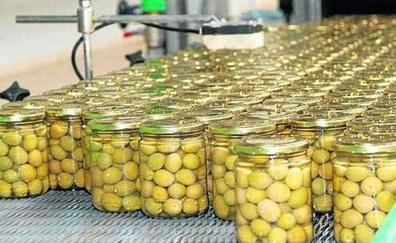 La producción de aceituna de mesa en Málaga alcanzará esta campaña las 61.750 toneladas
