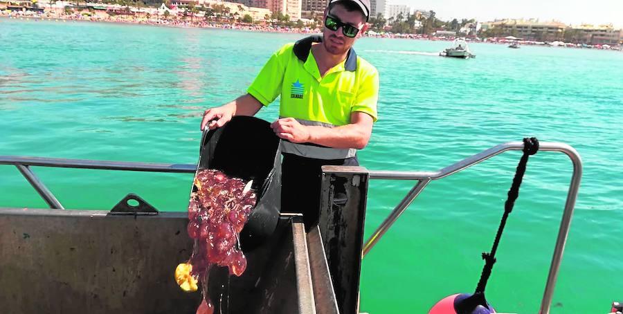 Cifran en 80 toneladas las medusas recogidas este verano en las playas del litoral occidental