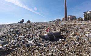 Basura y ratas muertas se acumulan en varios kilómetros de playas de Málaga capital