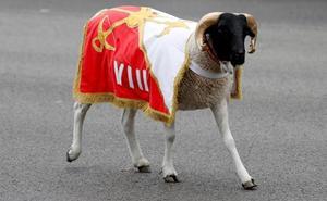 'Palito', la cabra de la Legión, una de las estrellas del desfile del Día de la Hispanidad