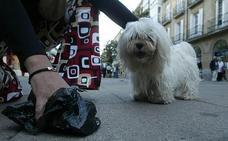 Medio Ambiente aprueba intensificar las multas a los que dejen los excrementos de sus perros en la vía pública