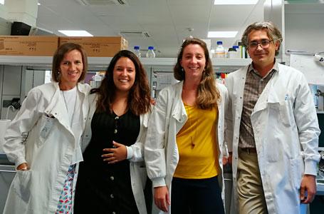 Una nueva nanoterapia evita el rechazo de órganos trasplantados