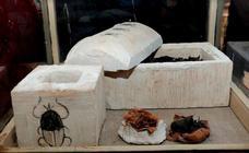 Hallan por primera vez momias de escarabajos y gatos del Antiguo Egipto
