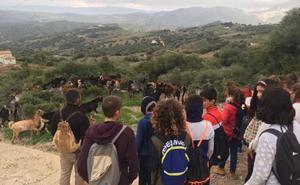 Asignatura en Casares: pastoreo