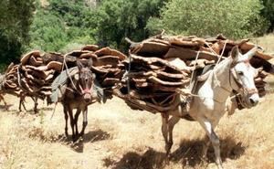 La 'caca de la mula' lleva premio en Estepona