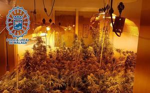 La Policía Local acompaña a un hombre sin identificar a su casa y descubre casi 100 plantas de marihuana