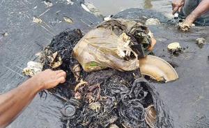 Hallan muerto un cachalote en Indonesia con seis kilos de plástico en el estómago