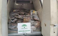 Decomisan casi cuatro toneladas de pulpo ilegal en Fuengirola y cuatro atunes rojos en Málaga
