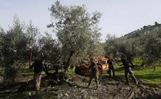 El aceite de oliva de la DOP Antequera encuentra en China su gran mercado