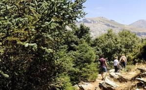 El Gobierno aprueba la propuesta final del nombramiento de la Sierra de las Nieves como parque nacional