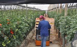La Junta amplía la solicitud de las ayudas para jóvenes y modernización de invernaderos hasta enero de 2019