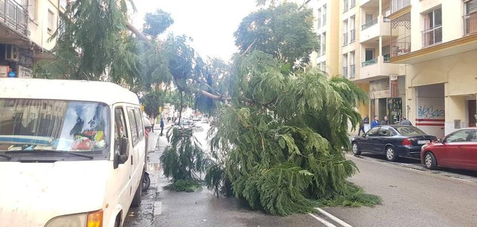 Una mujer herida por la caída de una palmera por el fuerte viento, que provoca también la rotura de cristales en Málaga