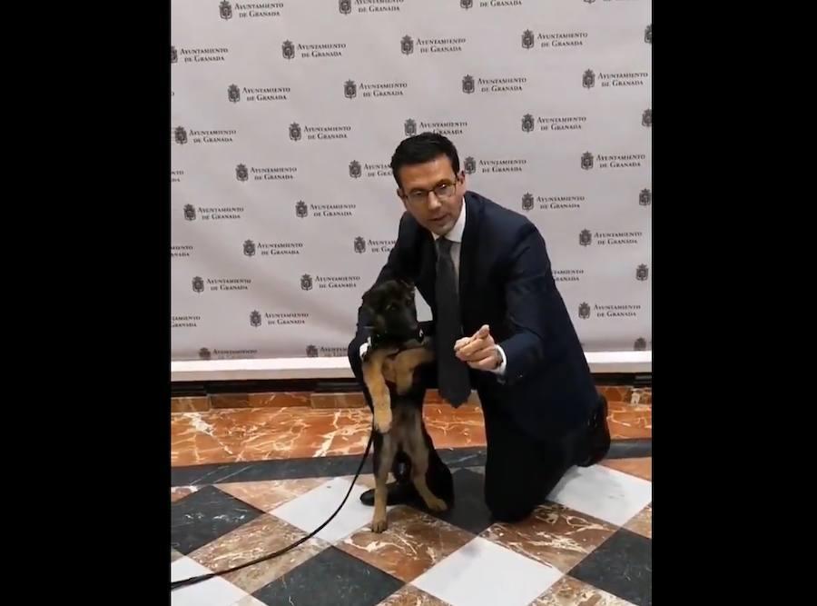 Stan Lee, el perro adoptado por la Policía Local de Granada, se convierte en su nuevo agente