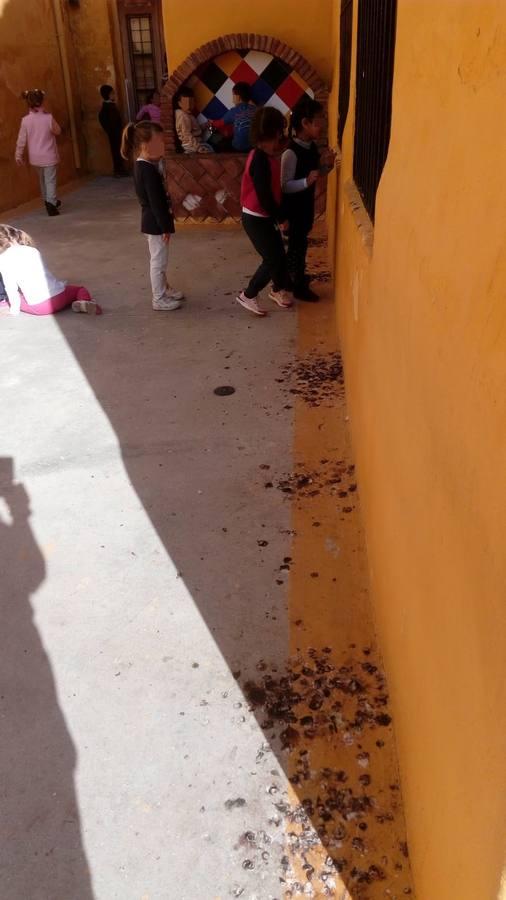 Colegio Ramón del Valle-Inclán: contra los excrementos de palomas