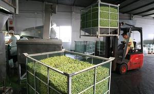 Filipinas y Australia, destinos que más crecen en compra de productos agraolimentarios andaluces hasta septiembre