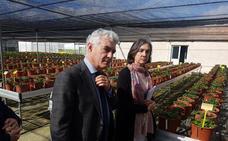 Autorizan al Ifapa para la identificación de nuevas variedades de fresa
