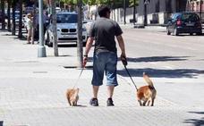 El Ayuntamiento de Mijas lanza una campaña para evitar que se regalen mascotas como si fueran juguetes en Navidad