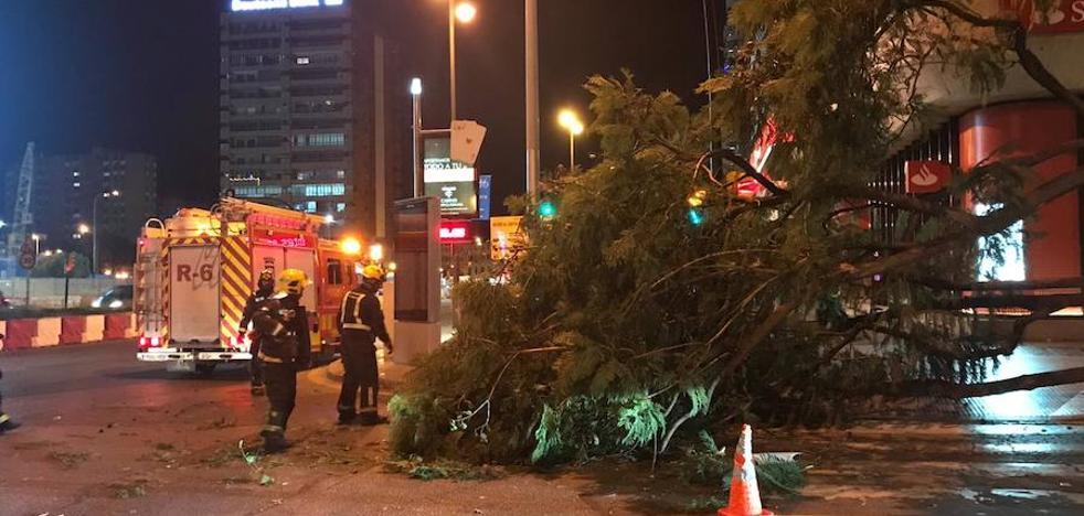 Un camión arranca de cuajo un árbol en la calle Hilera