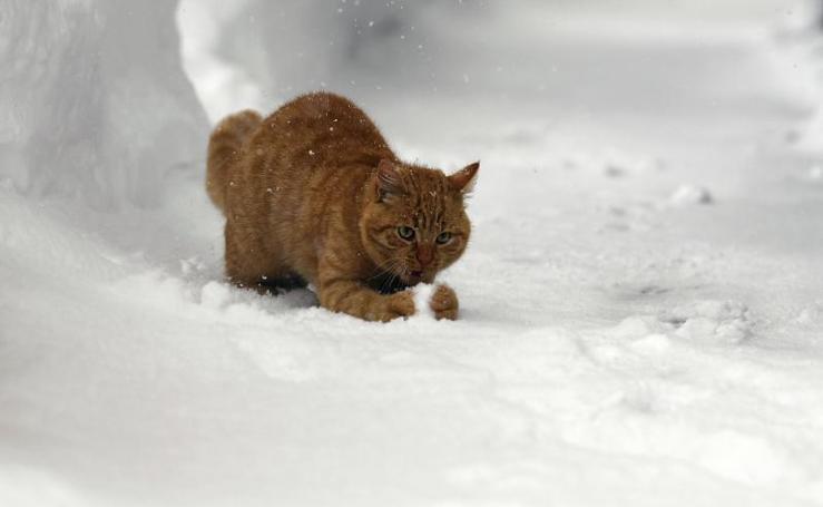 Las imágenes que deja una gran nevada en Austria