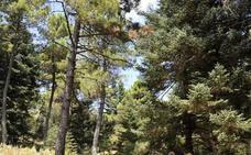 El BOE publica la aprobación de la propuesta de declaración del Parque Nacional de la Sierra de las Nieves