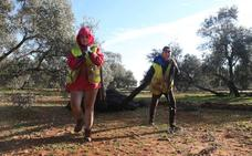 La falta de jornaleros sigue sin resolverse en el olivar de la provincia de Málaga