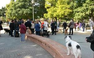 Excrementos de perros sin recoger en el barrio de la Victoria y Capuchinos
