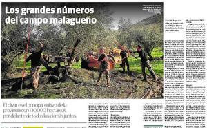 El especial Agro de SUR, Asprovélez y Francisco Pendón, galardonados en los X Premios San Sebastián de Algarrobo