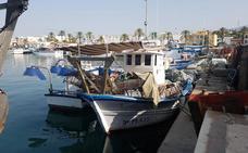 El pulpo, especie que más valor aportó a la pesca en la provincia en 2018