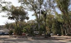Vecinos de Pedregalejo advierten del riesgo de que desaparezca una planta en peligro de extinción en los Baños del Carmen
