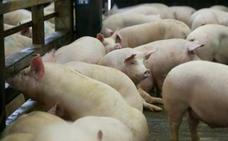 Asaja Málaga reclama al Ministerio la inclusión de la Peste Porcina Africana en los Seguros de Ganado
