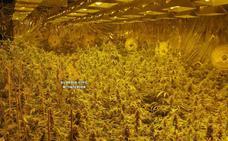 Seis detenidos por cultivar mil plantas de marihuana en un sótano en Alhaurín el Grande