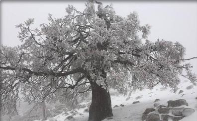Primeras nevadas en Málaga
