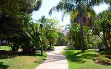 El Ayuntamiento saca a concurso la adquisición de palmeras y árboles por valor de 118.000 euros para los barrios