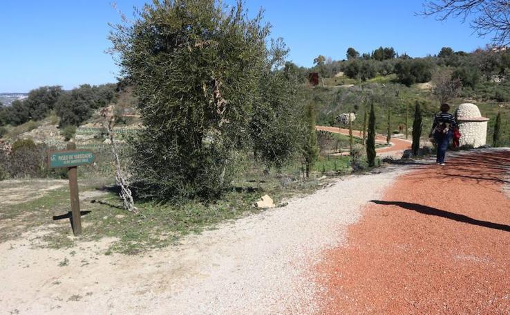 Primera fase del proyecto de la almazara ecológica diseñada por Starck en Ronda