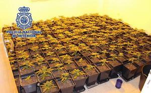 Desmantelan un cultivo con 221 plantas de marihuana en una casa propiedad de un banco en Málaga