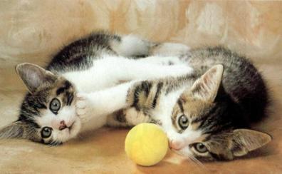 ¿Por qué se celebra hoy, 20 de febrero, el Día Internacional del Gato?
