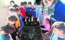 Tres colegios malagueños, en la final de los premios de Innovación Educativa