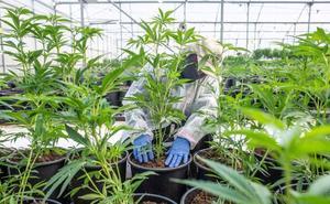 El crecimiento del cultivo del cannabis aumenta el fraude eléctrico en Andalucía