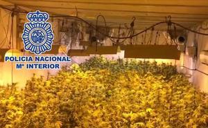 Desmantelan un invernadero de marihuana con 250 plantas en el polígono industrial La Estrella