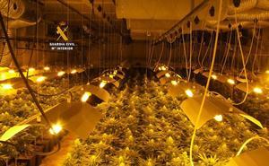 Desmantelan una plantación de marihuana en una nave industrial en Ronda