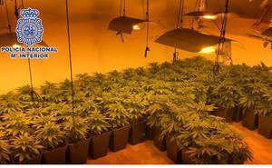 Desmantelan un invernadero con 140 plantas de marihuana en una vivienda de Málaga capital