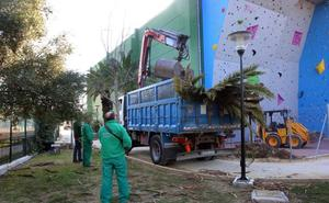 El Ayuntamiento de Marbella acomete el arreglo de las zonas verdes del polideportivo Paco Cantos