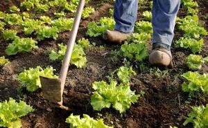 La Junta impulsa la reducción de trabas en las ayudas al sector agrícola