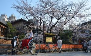 Primavera en Japón, el país se tiñe de rosa con la floración del 'sakura'