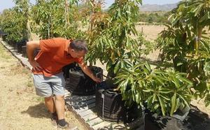 La Mayora y el Ifapa ensayan el comportamiento de cultivos ante el cambio climático